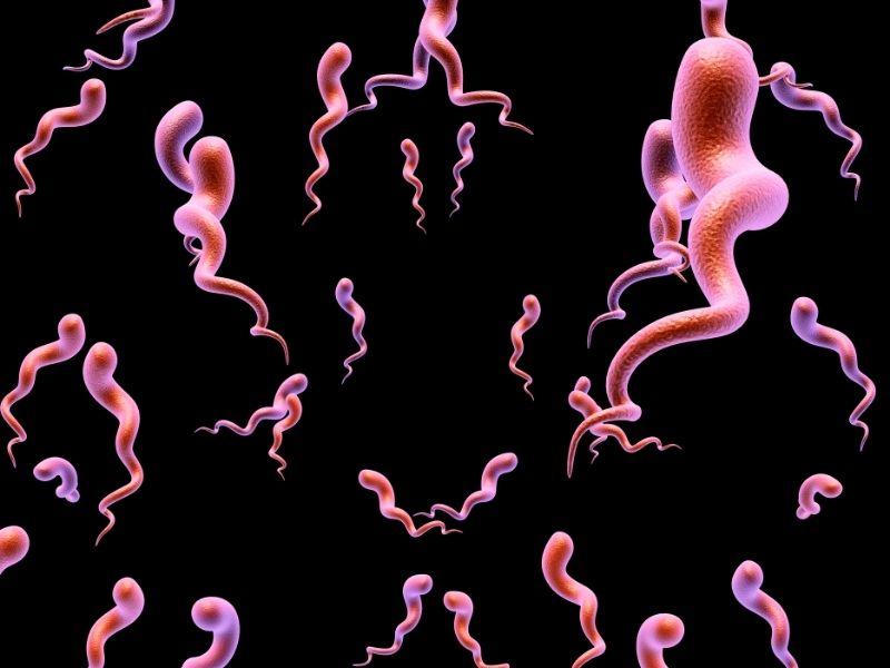 Rapid syphilis test singapore